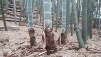 200526小机城址市民の森の竹林(9)