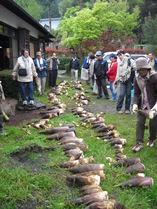 100424伊豆の国筍収穫