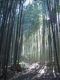 081130中井町 整備地区マダケ