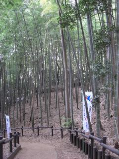 0804小机の竹林