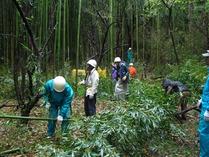 110423ハチク林の間伐