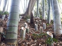 210403竹灯籠設置 (3)