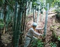 縮小 仕込んだ竹水