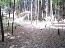 090502落ち葉のじゅうたん