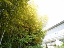 090502黄色になった笹葉