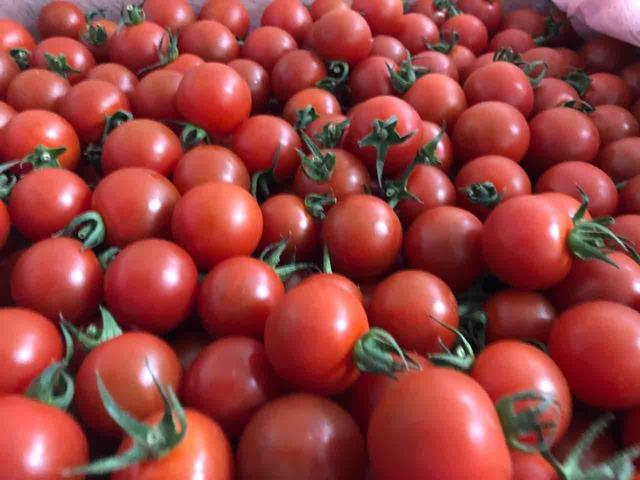ミヤザキファーム宮崎修太のトマト