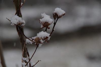ゆ 雪170209 7:11s-IMGP2676
