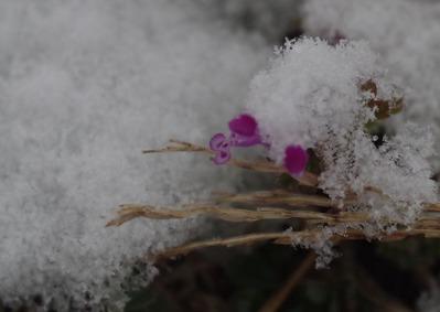 雪20210112IMGP9561
