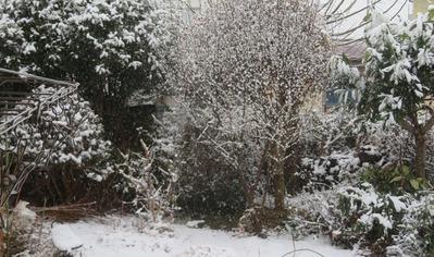 雪20210112IMG_7456