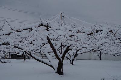 雪1802020744s-IMGP1708