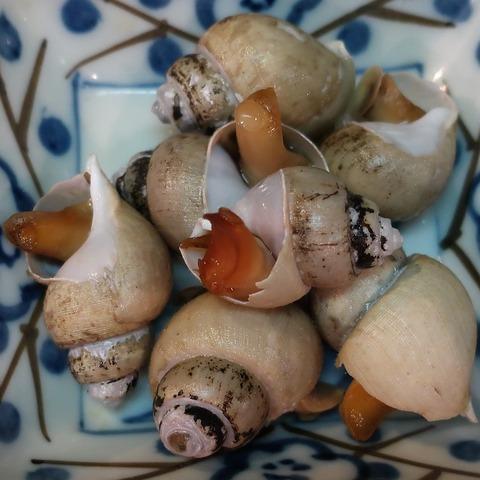 ばい貝煮付(樽平)500