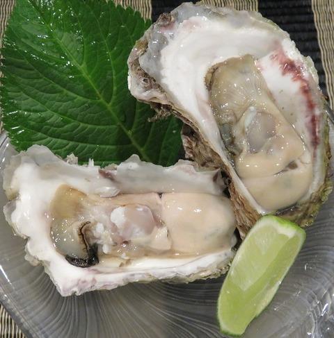 岩牡蠣(きく蔵)1500
