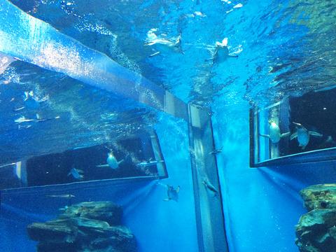 ペンギン水槽02