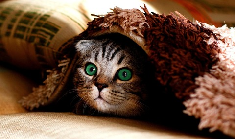 cat-2806957_1280