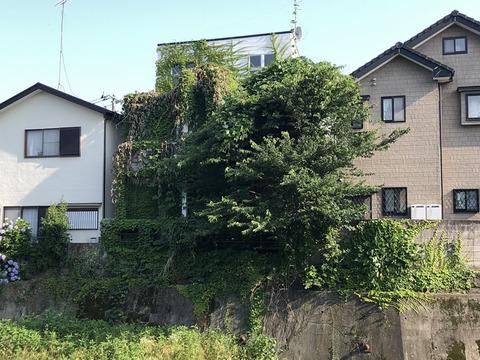 空き家の樹木管理