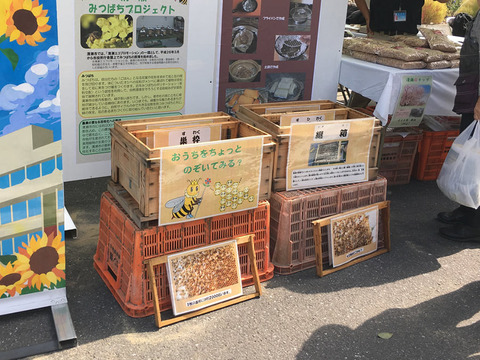 蜂みつ事業