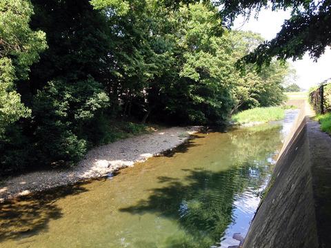 未開の薬科大北側の柳瀬川