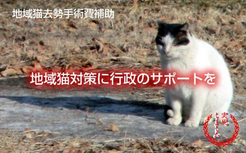 地域猫対策に行政のサポートを