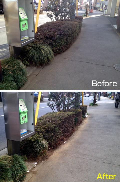 歩道にはみ出た植栽