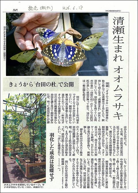 オオムラサキ記事