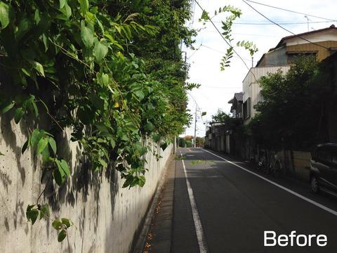 道路にはみ出した植栽