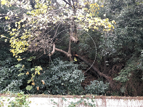 台風による倒木