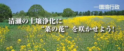 清瀬の土壌浄化に菜の花を咲かせよう