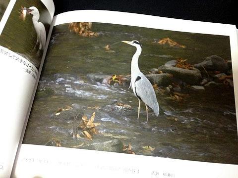 清瀬の野鳥