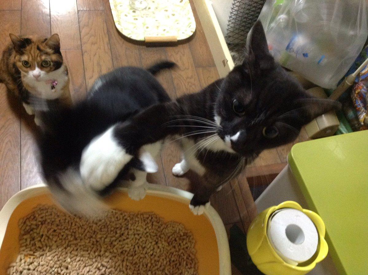 【衝撃】兄弟にアッパーカットを放つ猫が話題に  ご飯が待ちきれないためらしい!!! タコタ屋タコタ