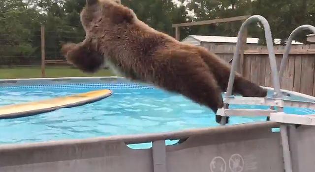 クマがプール
