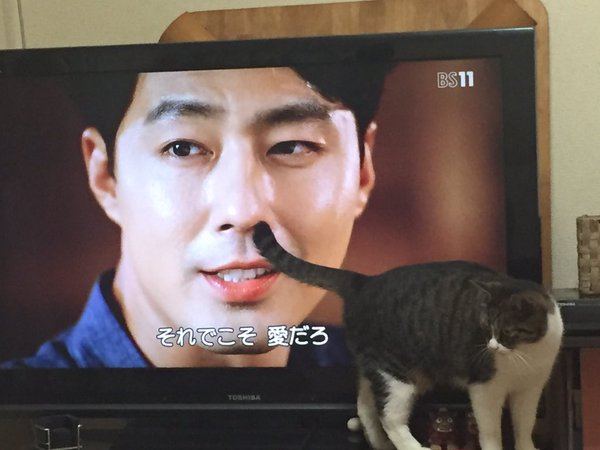 【TVとコラボ猫w】良いシーンをナイスなタイミングの猫ちゃんwww