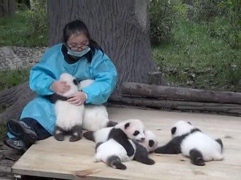 パンダ飼育員
