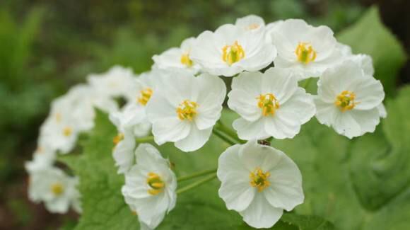 濡れると透明になる花綺麗