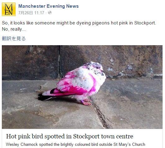 ピンク・ピジョンと呼ばれる絶滅危惧種の鳩