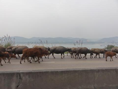 1215c中国自転車旅行記