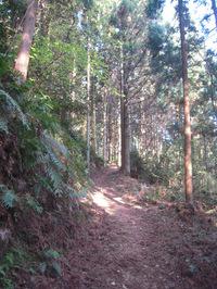 横峰寺への山道