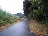 井ノ岬の街道