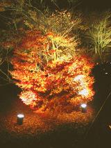 宝厳院庭園ライトアップ