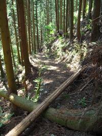 モエ坂の山道2