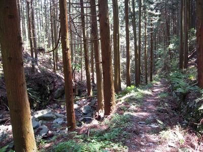 モエ坂の山道1