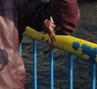 本牧釣り画像1