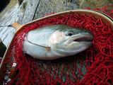 fishing2013fall_03