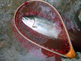 fishing2013fall_02