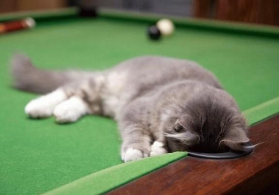猫ポケット