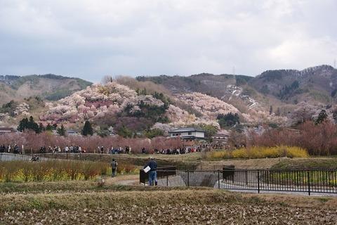 20100418花見山公園全景