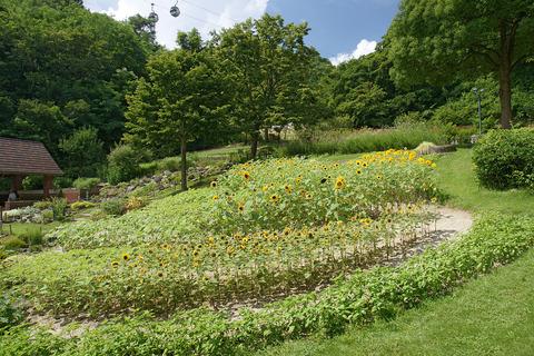 1280px-Kobe_Nunobiki_Herb_Garden04n4272
