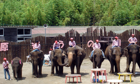 Elephant_Show_in_Ichihara