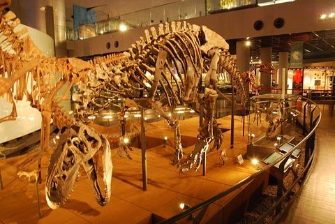 1024px-アロサウルスの骨格化石