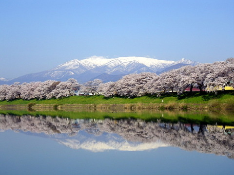1280px-Mount_Zaō_and_Sakura_01