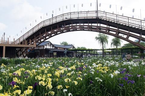 1024px-Suigo_Itako_Ayame_Garden_07